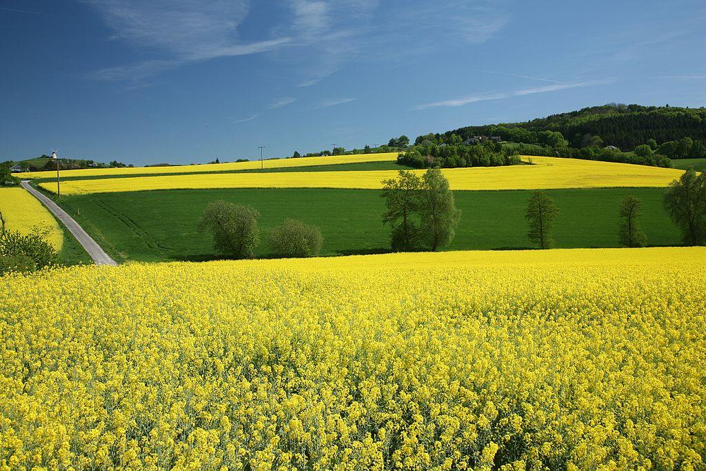 Agricolture - Foto di Daniel Schwen