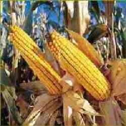 Sistema agroindustriale