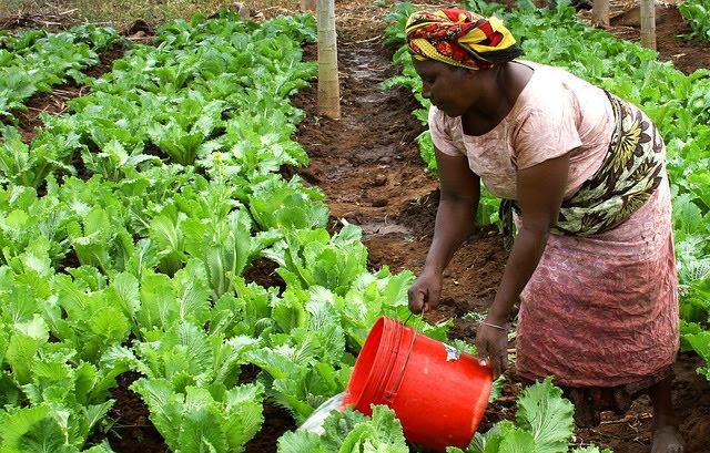 Agricoltura Africa
