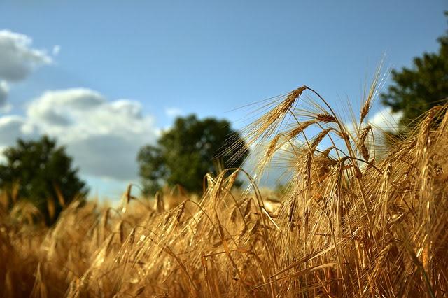 Agricoltura - Photo credit: Peggy Choucair da Pixabay