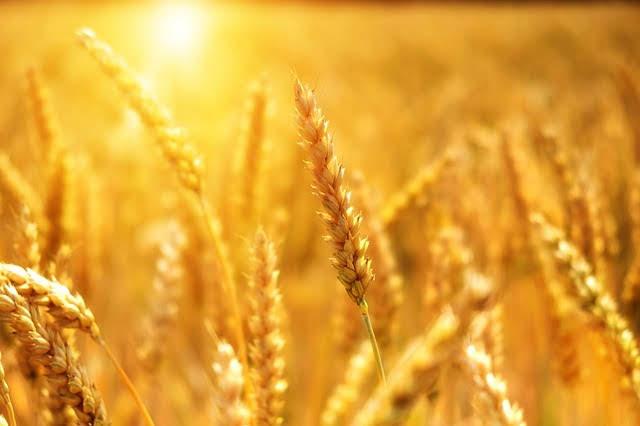 Piano strategico filiera grano-pasta - photo credit: Bru-No