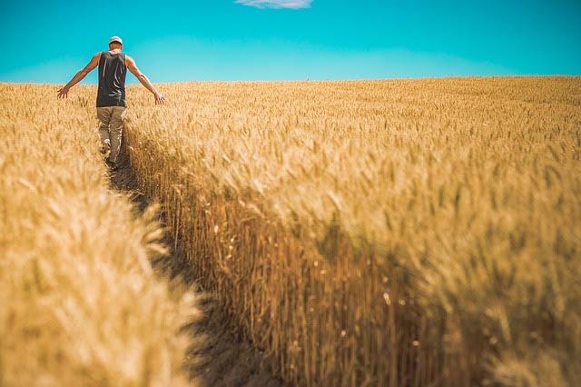 Manovra 2020: misure agricoltura - photo credit: Pexels