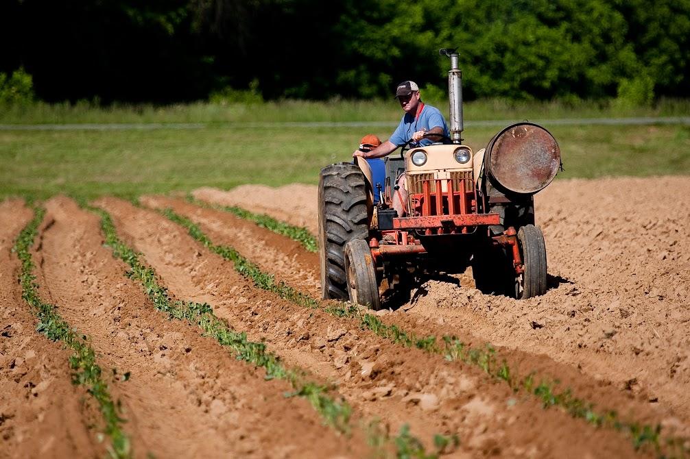 Coronavirus: le misure per il settore agricolo nel dl Cura Italia
