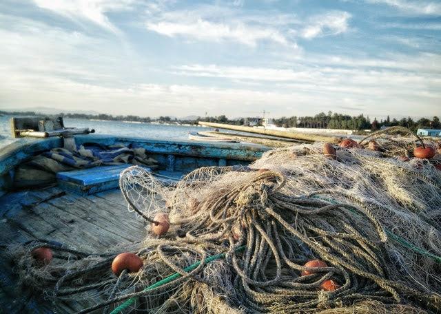 Pesca - Foto di Bedis ElAcheche da Pexels