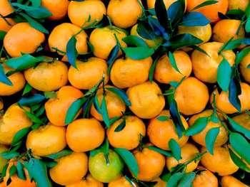 Agricoltura - Photo credit: Rogério Martins da Pexels
