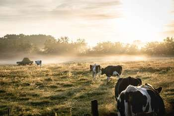 Fondi europei agricoltura allevamento - Foto di Lukas Hartmann da Pexels