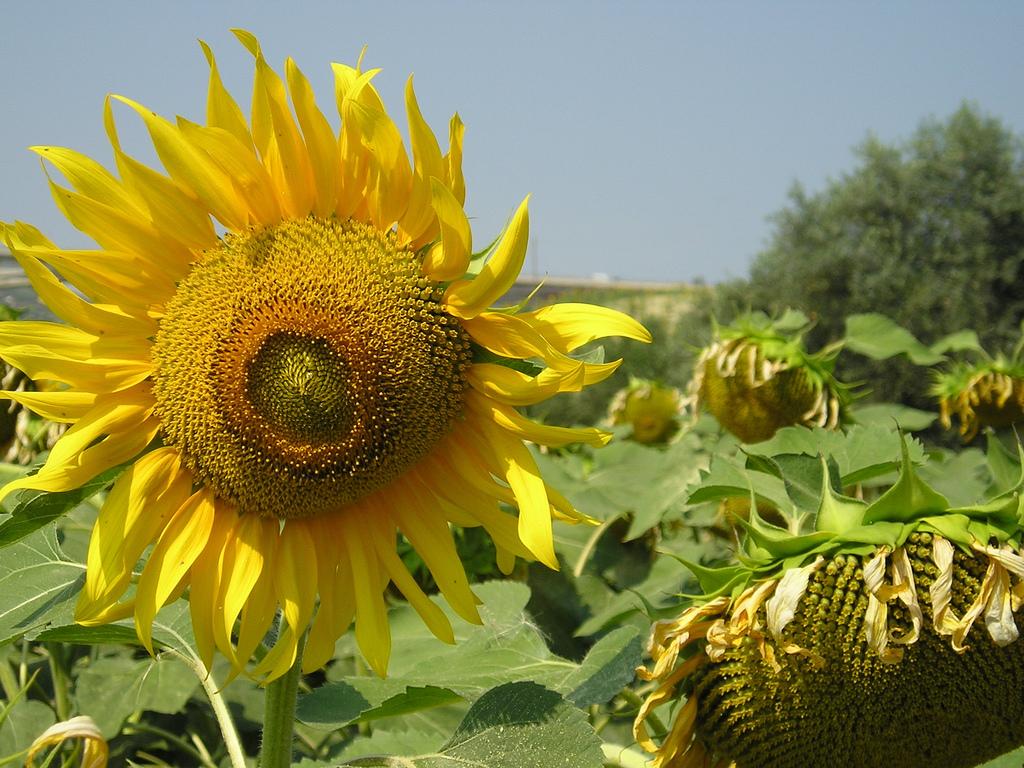 Agricoltura - Author: rogilde - roberto la forgia / photo on flickr