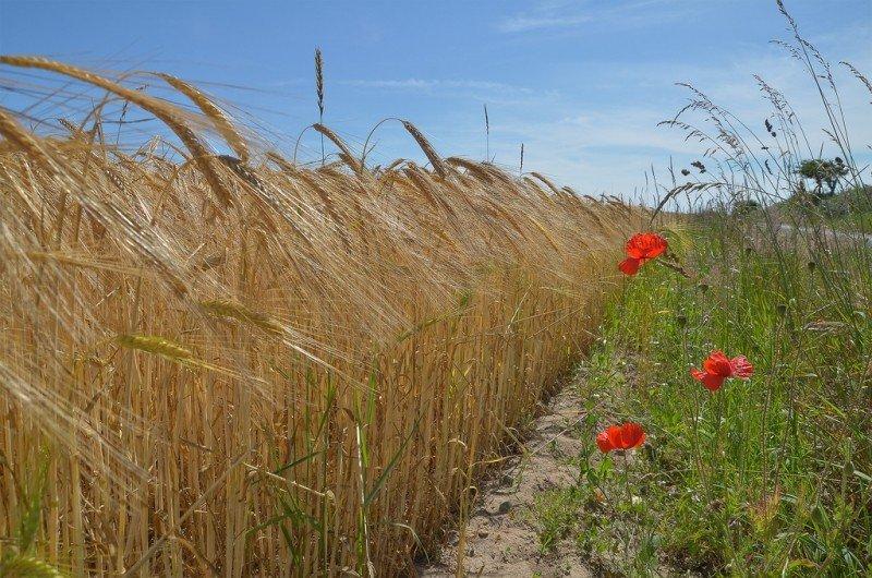 Summer field margin